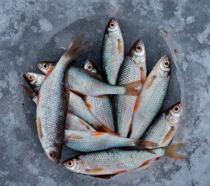 Washing fish stores uniforms